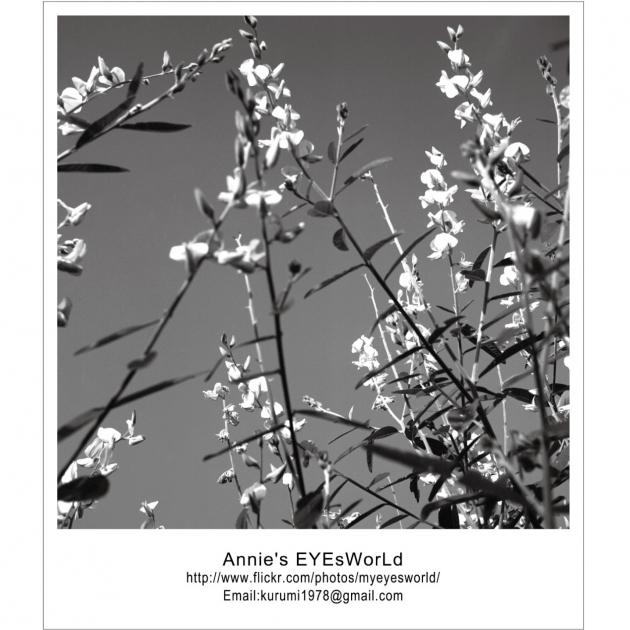 Annie Ma Postcard 3
