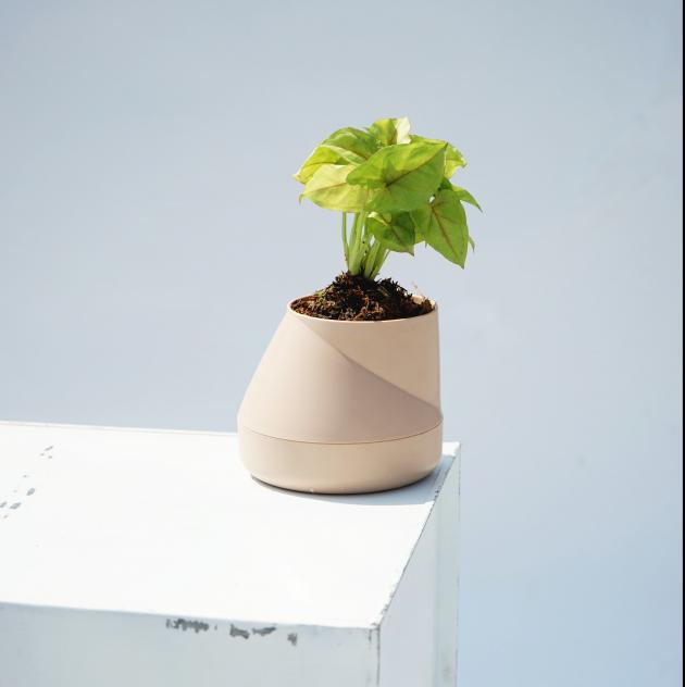 QUALY Hill Pot-山丘-花器S (4色) 3